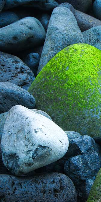bemooste Steine